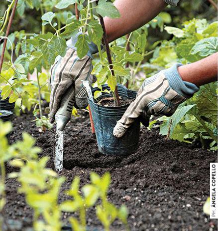 jardin-fecundo-03