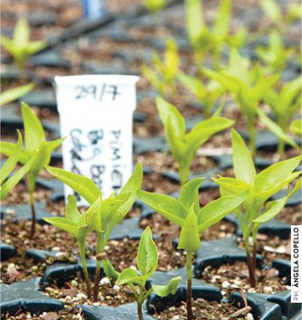 jardin-fecundo-06