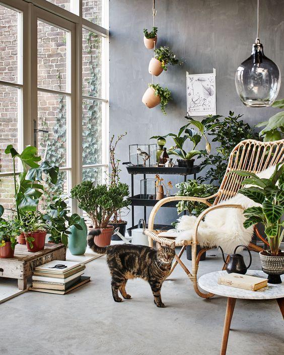 plantas en casa 4
