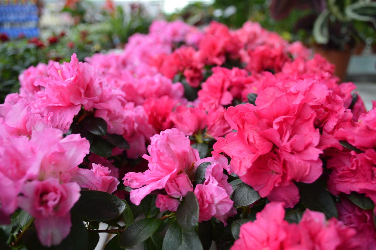 flores-colores-04