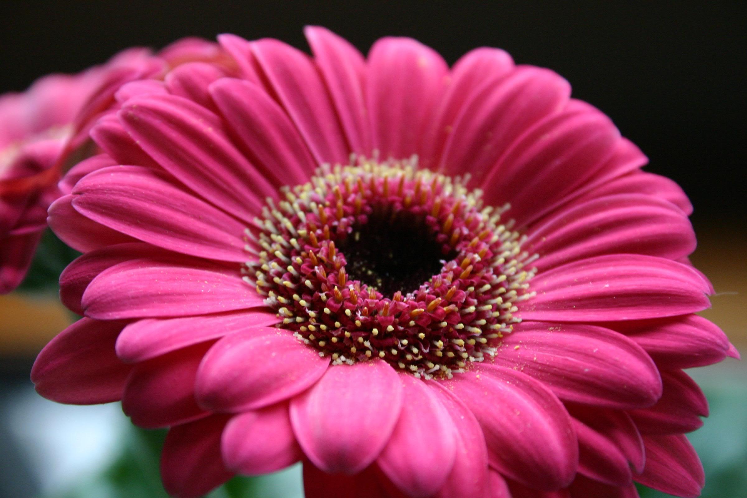 flores-corte-02