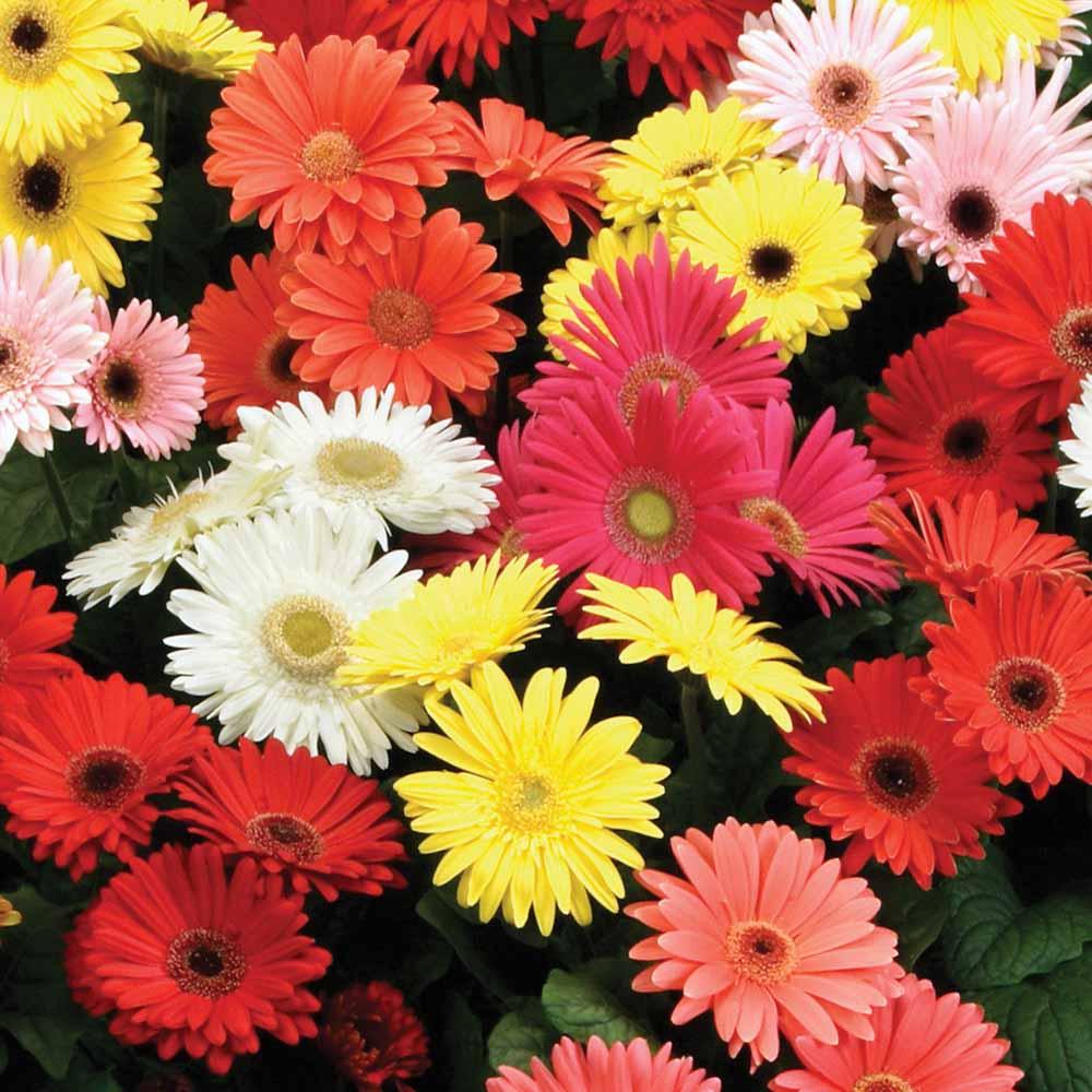 flores-corte-05